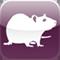 Cellar Rat